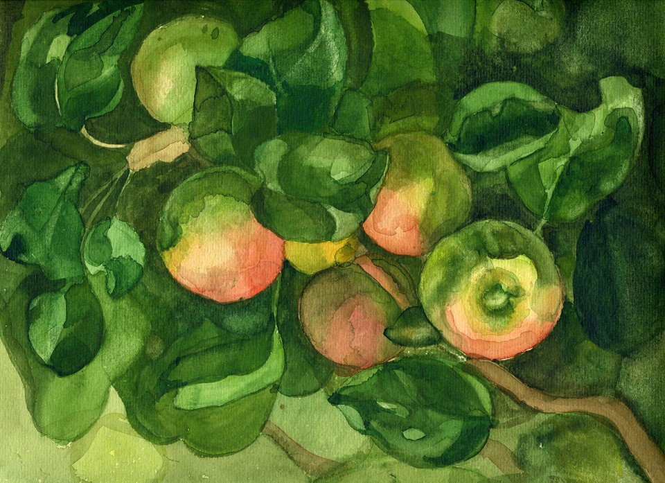 Tregubova Natalia, Apples and leaves, 1978, watercolor, paper, 23 x 31.5
